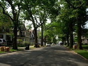 Neighborhood Trees